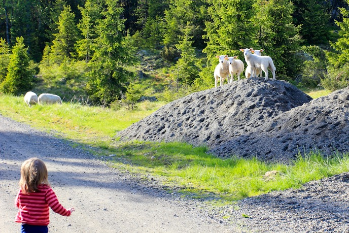 Toddler Chasing Sheep I @SatuVW I Destination Unknown