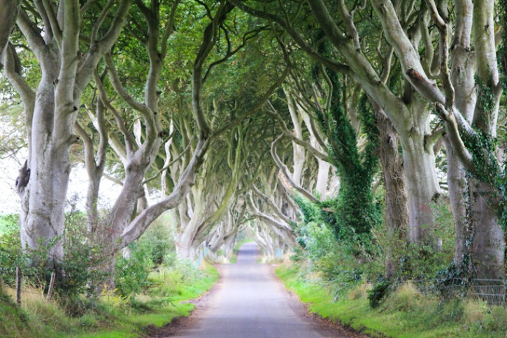 Dark Hedges of Ireland I @SatuVW I Destination Unknown