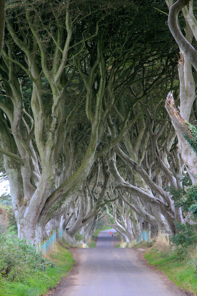 Dark Hedges in Northern Ireland I @SatuVW I Destination Unknown